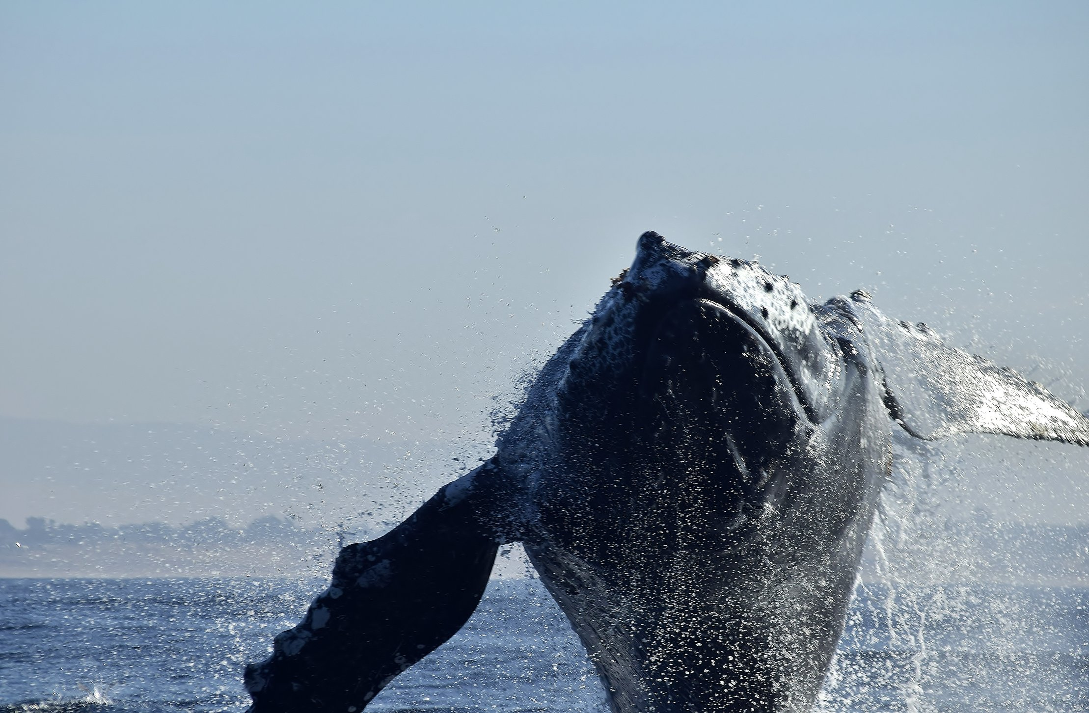 Whale Encounter in Monterey