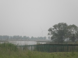Wild Duck Lake National Park, at Yanqing County, Beijing. Although it is hard to see in the background, there are wind turbines here in China, just scattered in certain areas.