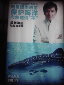 """In this picture, the text says """"Each year, around 70 million sharks are killed because of their fins. You can protect the oceans by just saying """"No"""" to shark fin soup. The Wild Aid slogan is the black part, which then says """"When the killing stops, the buying does to."""""""