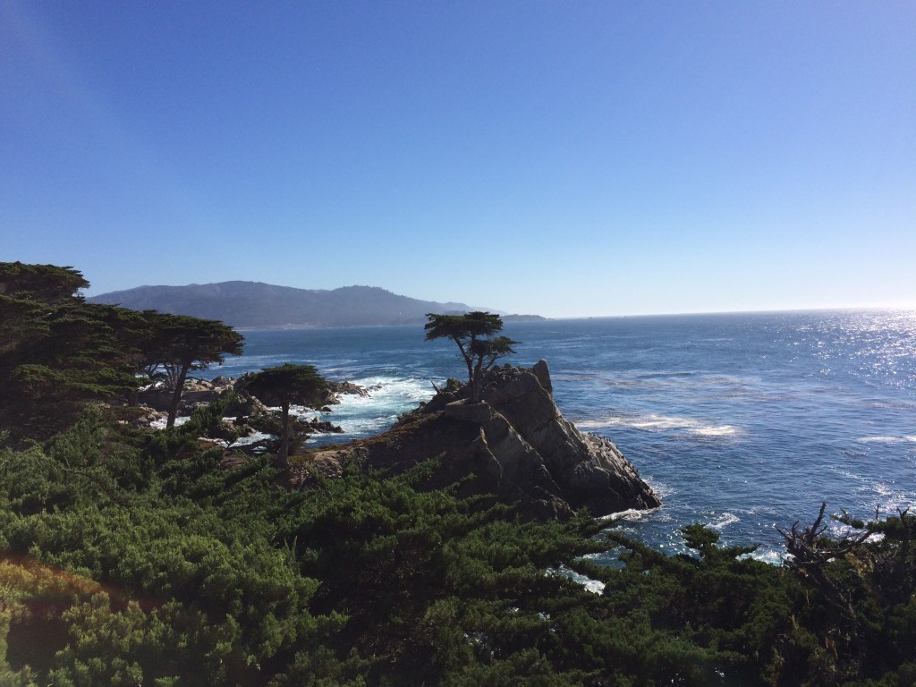 Monterey photo_cypress