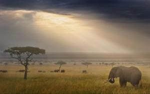 east-africa-wim-van-den -heever