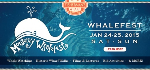 Whale fest