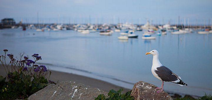 Monterey photo.jpg