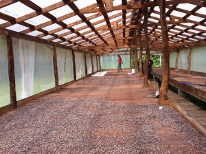 Cacao Drying Deck