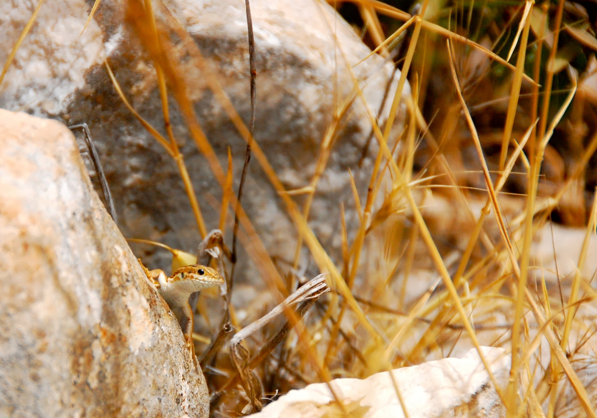 A curious climber in Ajloun Nature Reserve