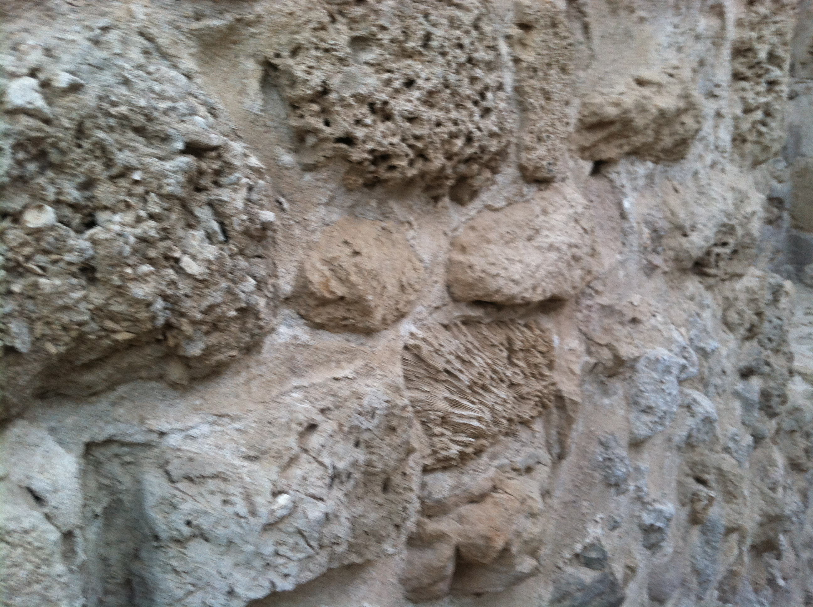 Corals were included in the walls of this historic Portuguese fort on Bahrain's coast