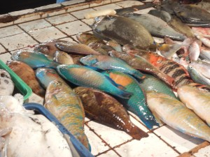Colorful Parrot Fish for sale