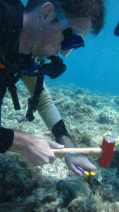 Hammering concrete nails to plant coral fragments