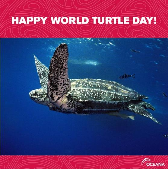 Happy international turtle day best brokers for binary options