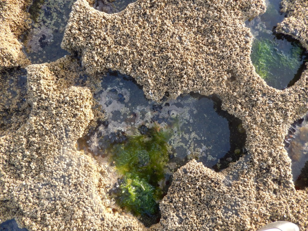 Delicate Tidepools