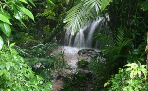 The Lacandona Jungle, located in Chiapas.