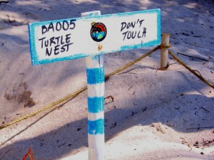 Camino de Tortugas, Akumal