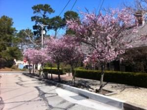 Kaori blog picture 1